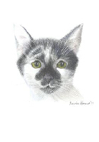 Coloured Pencil Drawing Cat