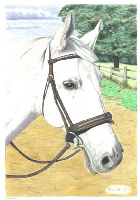 Coloured Pencil Drawing Horse