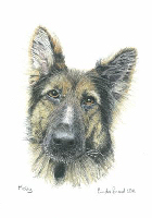 Coloured Pencil Drawing Police Dog
