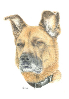 Coloured Pencil Drawing Dog